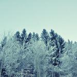 texture-12-01-11-fred-nasen